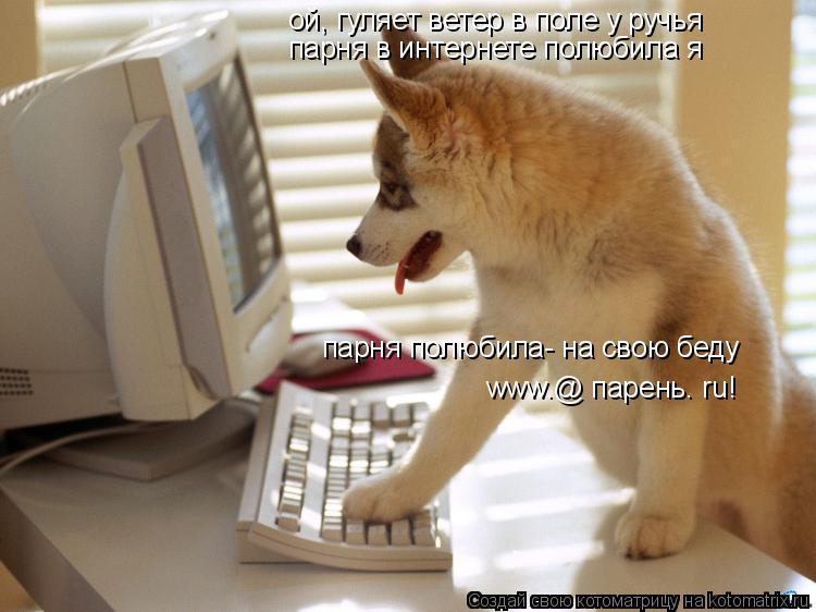 Котоматрица: ой, гуляет ветер в поле у ручья парня в интернете полюбила я парня полюбила- на свою беду www.@ парень. ru!