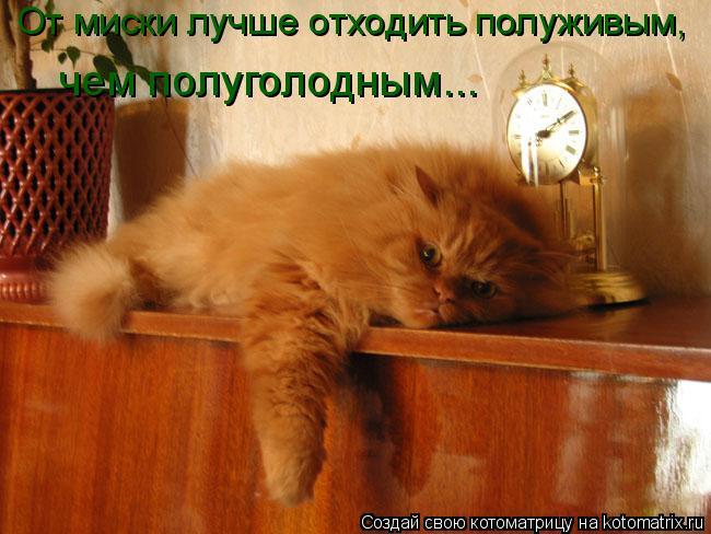 Котоматрица: От миски лучше отходить полуживым, чем полуголодным...
