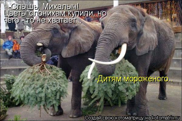 Котоматрица: -Слышь, Михалыч! Цветы слонихам купили, но  чего - то не хватает... -Дитям мороженого..