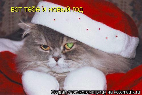 Котоматрица: вот тебе и новый год