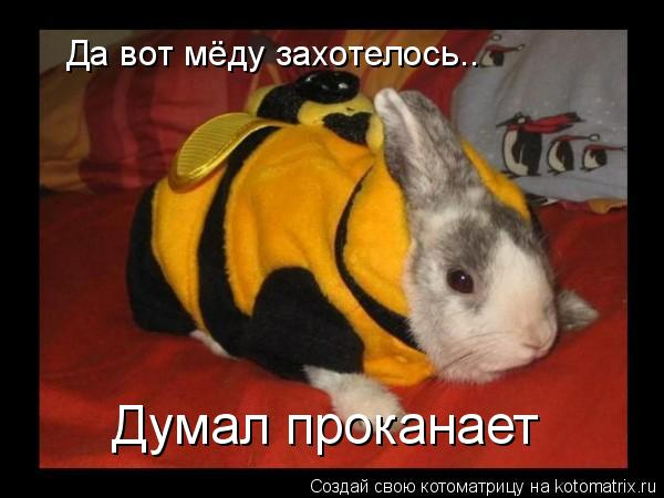 Котоматрица: Да вот мёду захотелось.. Думал проканает