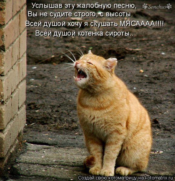 Котоматрица: Услышав эту жалобную песню, Вы не судите строго, с высоты. Всей душой хочу я скушать МЯСАААА!!!! Всей душой котенка сироты..
