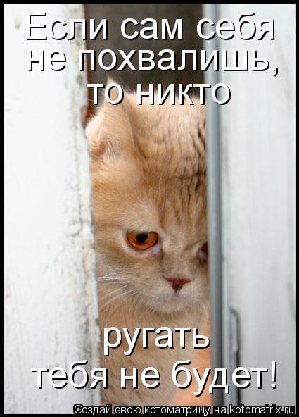 Котоматрица: Если сам себя  не похвалишь,  то никто  ругать  тебя не будет!