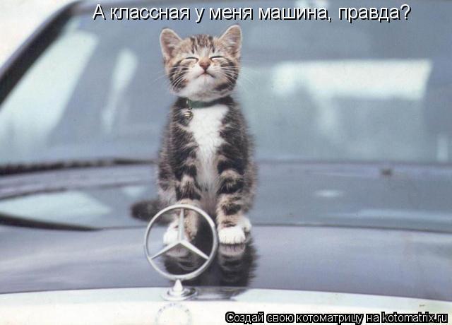 Котоматрица: А классная у меня машина, правда?