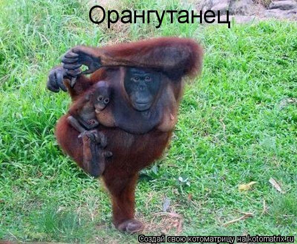 Котоматрица: Орангутанец