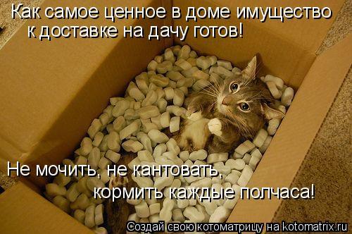 Котоматрица: Как самое ценное в доме имущество к доставке на дачу готов! Не мочить, не кантовать, кормить каждые полчаса!
