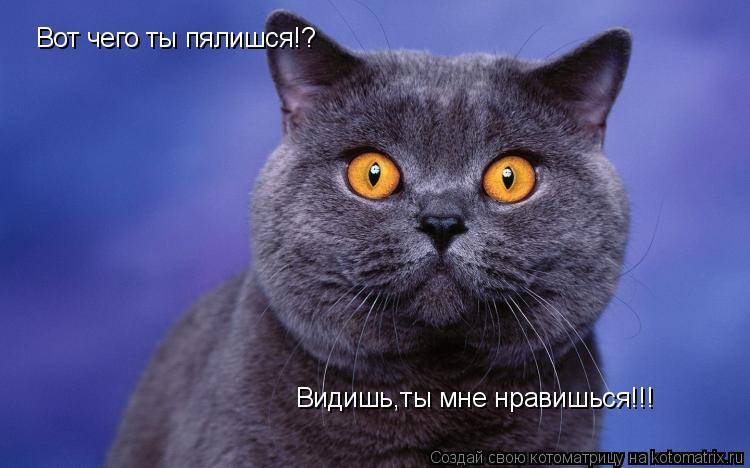 Котоматрица: Вот чего ты пялишся!? Видишь,ты мне нравишься!!!