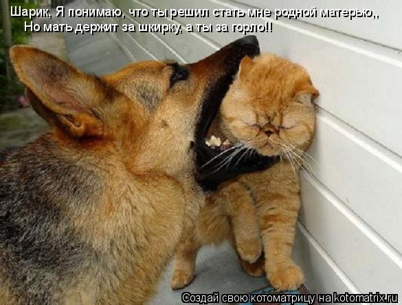 Котоматрица: Шарик, Я понимаю, что ты решил стать мне родной матерью,, Но мать держит за шкирку, а ты за горло!!