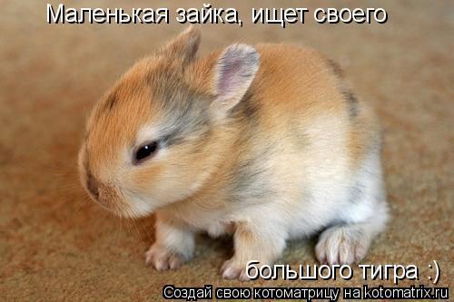 Котоматрица: Маленькая зайка, ищет своего  большого тигра :)