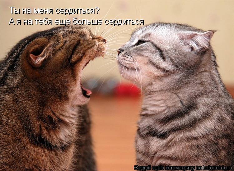 Котоматрица: Ты на меня сердиться? А я на тебя еще больше сердиться