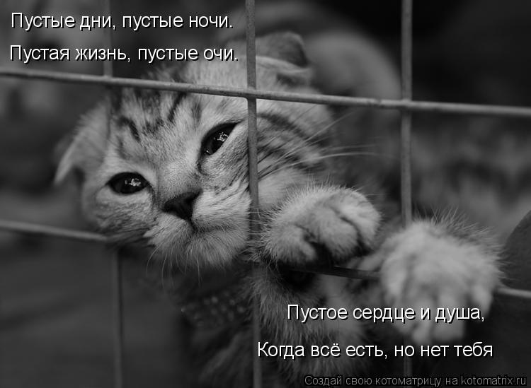 Котоматрица: Пустые дни, пустые ночи.    Когда всё есть, но нет тебя Пустая жизнь, пустые очи.  Пустое сердце и душа,