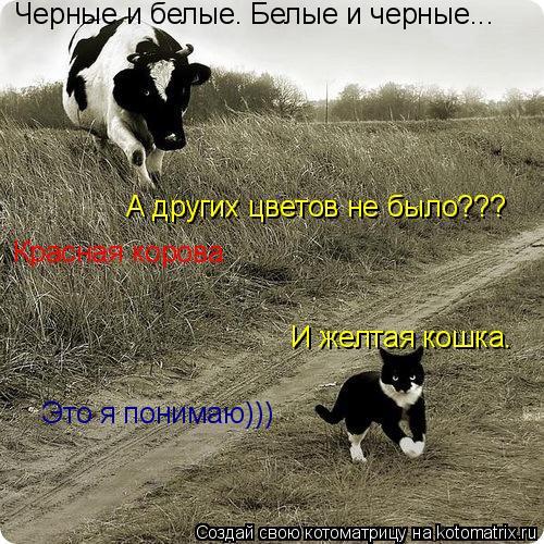 Котоматрица: Черные и белые. Белые и черные... А других цветов не было??? Красная корова И желтая кошка. Это я понимаю)))