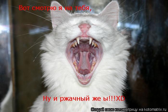 Котоматрица: Вот смотрю я на тебя, Ну и ржачный же ы!!!XD