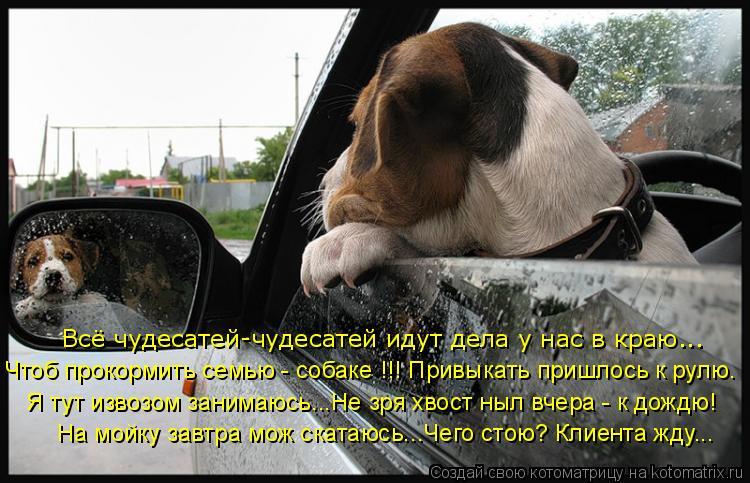 Котоматрица: Всё чудесатей-чудесатей идут дела у нас в краю... Чтоб прокормить семью - собаке !!! Привыкать пришлось к рулю. Я тут извозом занимаюсь...Не зря