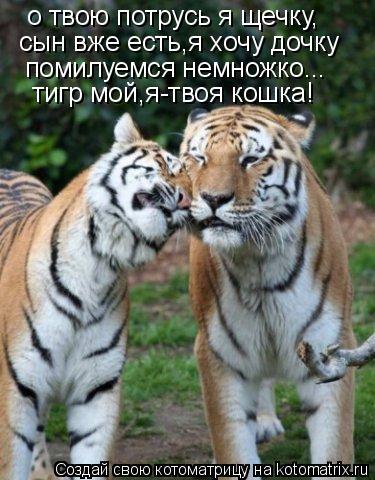 Котоматрица: о твою потрусь я щечку, сын вже есть,я хочу дочку помилуемся немножко... тигр мой,я-твоя кошка!