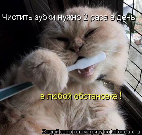 Котоматрица: Чистить зубки нужно 2 раза в день в любой обстановке !