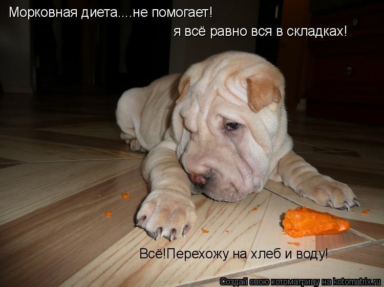 Котоматрица: Морковная диета....не помогает! я всё равно вся в складках! Всё!Перехожу на хлеб и воду!