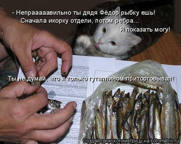 Котоматрица: - Непрааааавильно ты дядя Фёдор рыбку ешь! Сначала икорку отдели, потом ребра... Я показать могу! Ты не думай, что я только гуталлином приторг