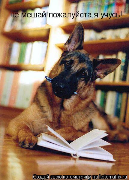 Котоматрица: не мешай пожалуйста.я учусь!