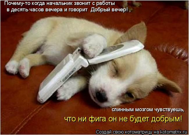Котоматрица: Почему-то когда начальник звонит с работы  в десять часов вечера и говорит «Добрый вечер!»,  спинным мозгом чувствуешь,  что ни фига он не буд