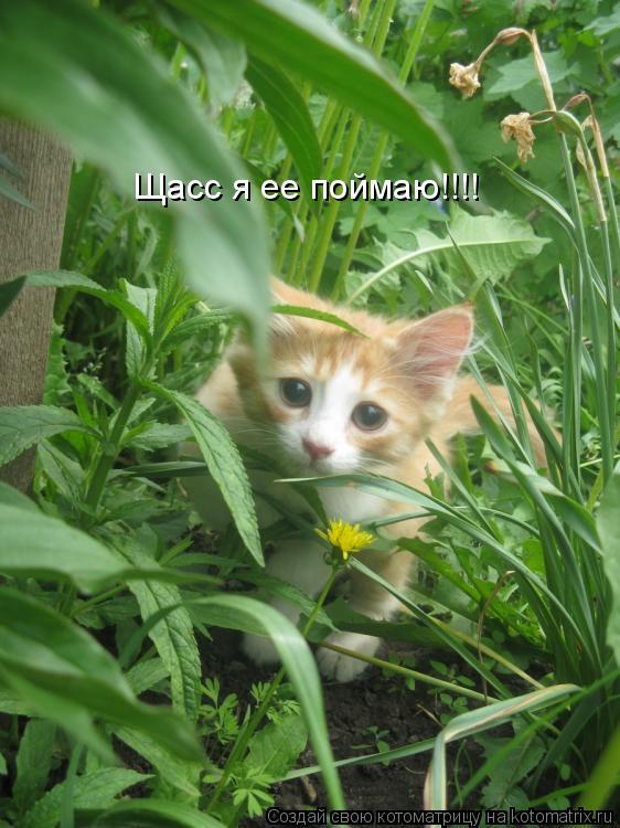 Котоматрица: Щасс я ее поймаю!!!!