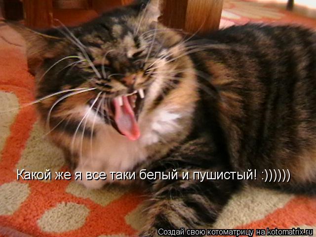 Котоматрица: Какой же я все таки белый и пушистый! :))))))