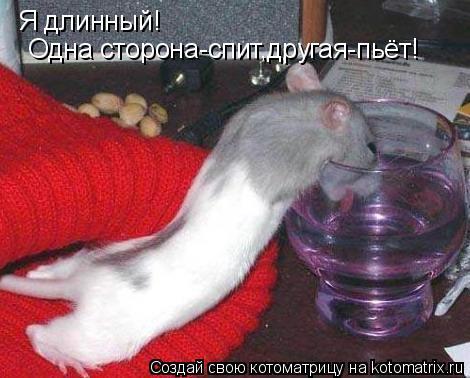 Котоматрица: Я длинный! Одна сторона-спит,другая-пьёт!