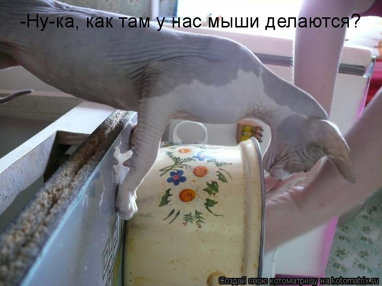 Котоматрица: -Ну-ка, как там у нас мыши делаются?