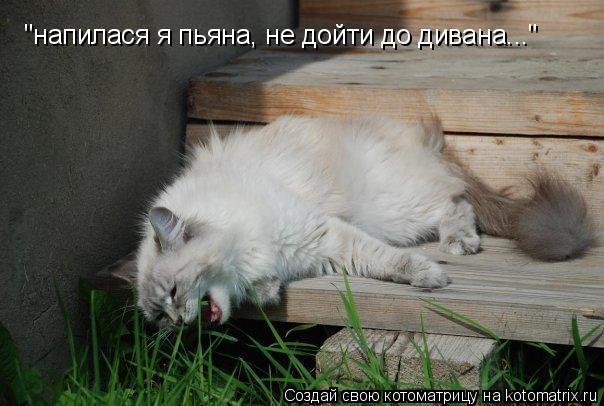 """Котоматрица: """"напилася я пьяна, не дойти до дивана..."""""""