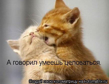 Котоматрица: А говорил умеешь целоваться.