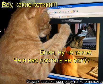 Котоматрица: Вау, какие котики!!! Блин, ну чё такое, Чё я вас достать не могу?