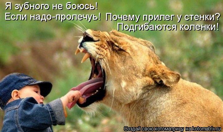 Котоматрица: Я зубного не боюсь! Если надо-пролечуь! Почему прилег у стенки? Подгибаются коленки!
