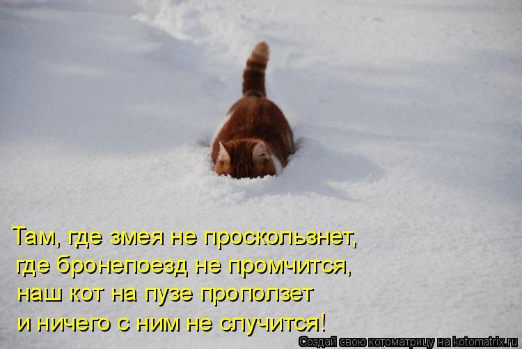 Котоматрица: Там, где змея не проскользнет,  где бронепоезд не промчится,  наш кот на пузе проползет и ничего с ним не случится!