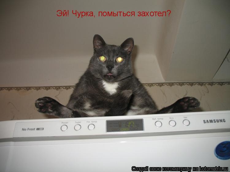 Котоматрица: Эй! Чурка, помыться захотел?