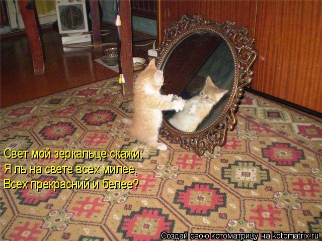 Котоматрица: Свет мой зеркальце скажи: Я ль на свете всех милее, Всех прекрасний и белее?
