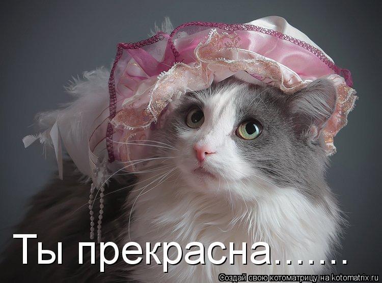 Котоматрица: Ты прекрасна.......