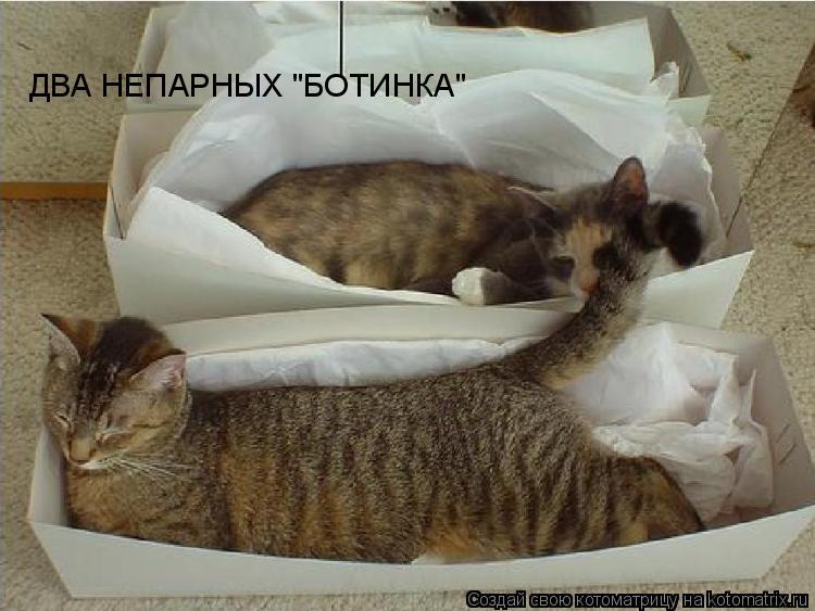 "Котоматрица: ДВА НЕПАРНЫХ ""БОТИНКА"""