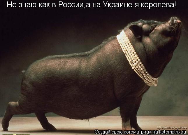 Котоматрица: Не знаю как в России,а на Украине я королева!