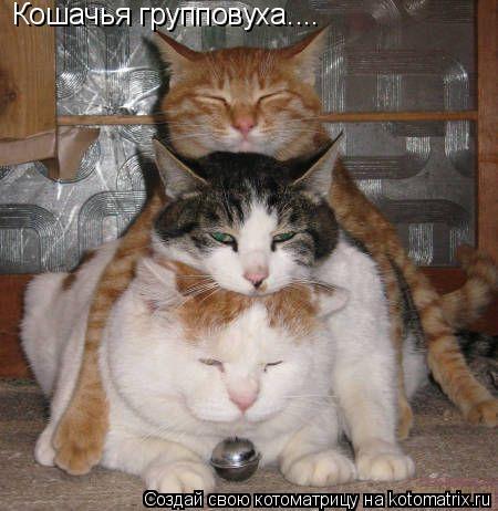 Котоматрица: Кошачья групповуха....