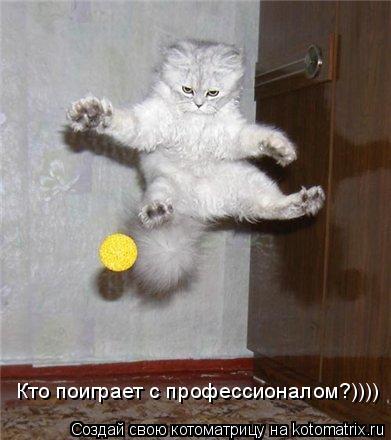 Котоматрица: Кто поиграет с профессионалом?))))