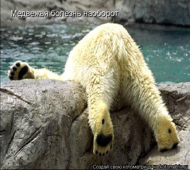 Котоматрица: Медвежья болезнь наоборот