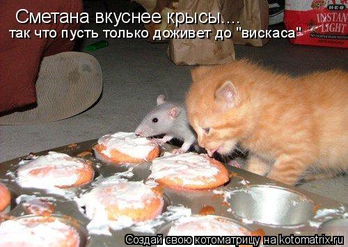 """Котоматрица: Сметана вкуснее крысы.... так что пусть только доживет до """"вискаса"""""""