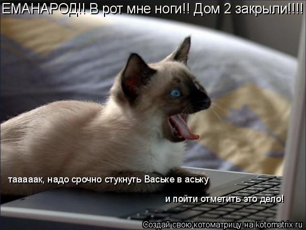 Котоматрица: ЕМАНАРОД!! В рот мне ноги!! Дом 2 закрыли!!!! тааааак, надо срочно стукнуть Ваське в аську  и пойти отметить это дело!