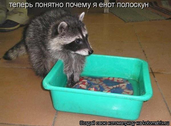 Котоматрица: теперь понятно почему я енот полоскун
