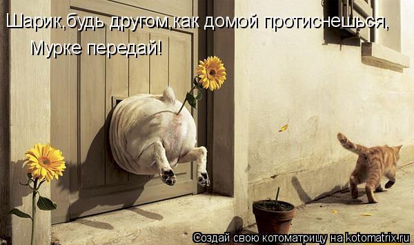 Котоматрица: Шарик,будь другом,как домой протиснешься, Мурке передай!