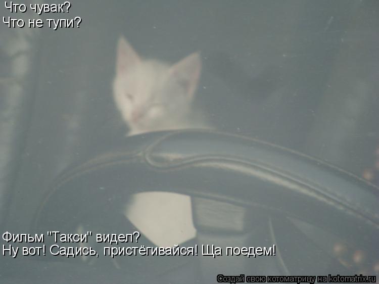"""Котоматрица: Что чувак? Что не тупи? Фильм """"Такси"""" видел? Ну вот! Садись, пристёгивайся! Ща поедем!"""