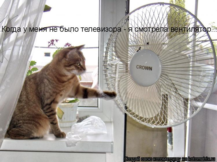 Котоматрица: Когда у меня не было телевизора - я смотрела вентилятор... Когда у меня не было телевизора - я смотрела вентилятор...