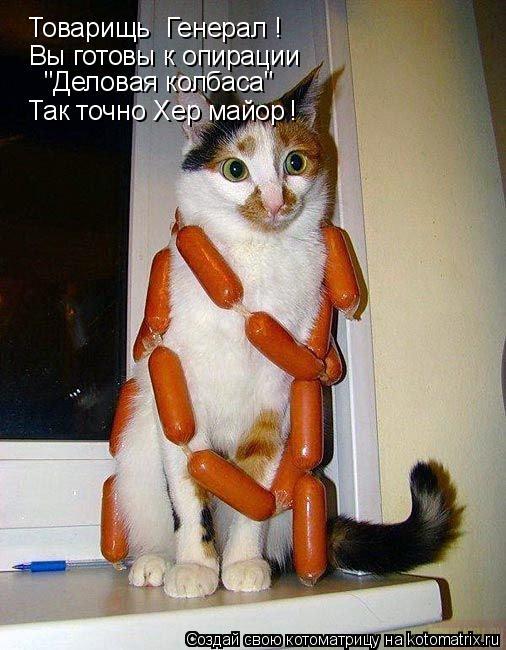 """Котоматрица: Товарищь  Генерал ! Вы готовы к опирации  """"Деловая колбаса"""" Так точно Хер майор !"""