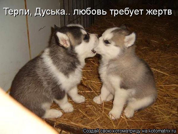Котоматрица: Терпи, Дуська.. любовь требует жертв