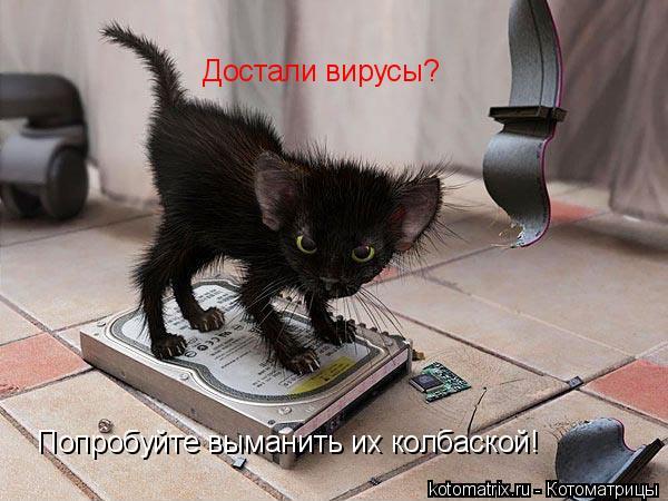 Котоматрица: Достали вирусы? Попробуйте выманить их колбаской!